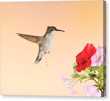 Canvas Print featuring the photograph Whiz Kid by Gerry Sibell