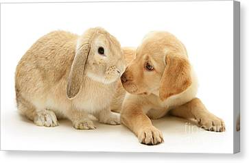 Who Ate All The Carrots Canvas Print