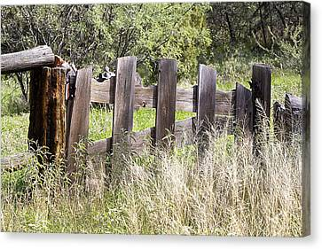 Canvas Print featuring the photograph Who Ate The Fence by Phyllis Denton