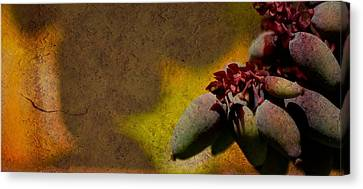 Who Knows Canvas Print by Trish Tritz