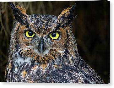 Who, Me? Canvas Print by Brent L Ander