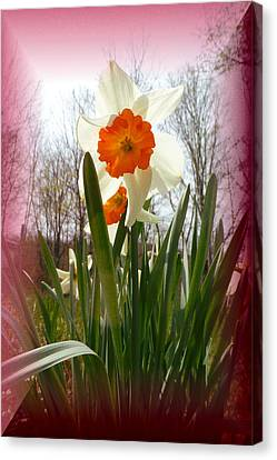 Canvas Print - Who Planted Those Flowers by Patricia Keller
