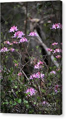 Canvas Print featuring the photograph Who Put The Wild In Wildflowers by Skip Willits