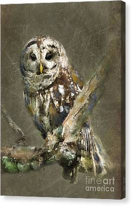 Whoooo Canvas Print by Betty LaRue