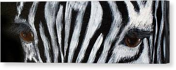 Whos Watching Who   Zebra Canvas Print by Darlene Green