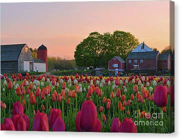 Wicked Awesome Tulips Canvas Print