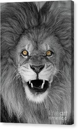 Wicked Black And White  T O C Canvas Print by Judy Whitton