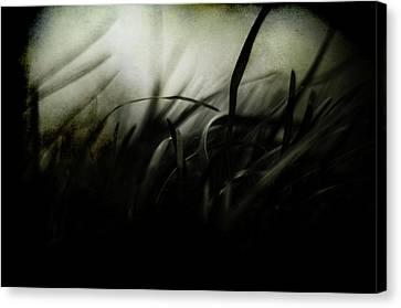Wicked Garden Canvas Print by Rebecca Sherman