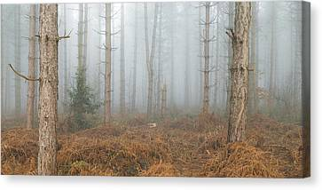 Early Spring Canvas Print - Through The Trees by Chris Dale