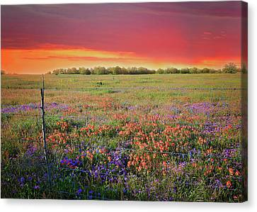 Wild About Texas Sunsets Canvas Print by Lynn Bauer