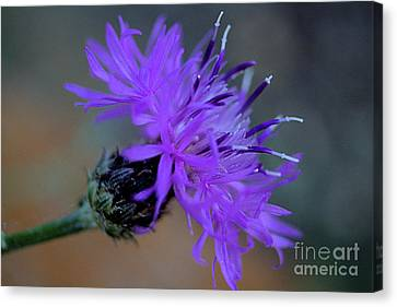 Wild And Beautiful 32 Canvas Print by Victor K