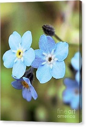 wild and Beautiful 4 Canvas Print