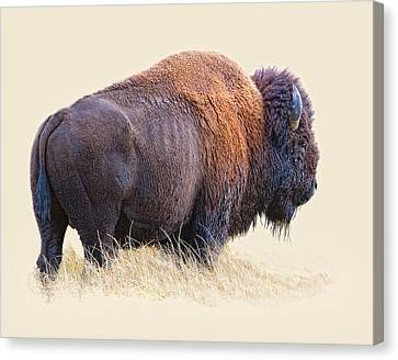 Wild And Wooly Canvas Print by Dewain Maney