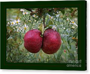 Wild Apples Canvas Print by John Stephens