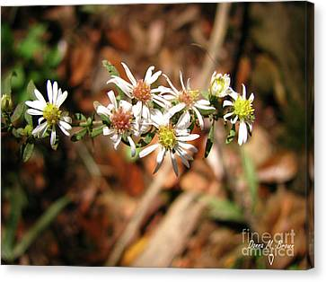 Canvas Print featuring the photograph Wild Astors by Donna Brown