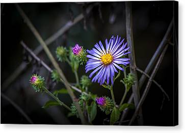 Forest Floor Canvas Print - Wild Beauty by Marvin Spates