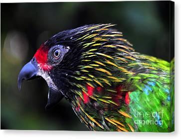 Wild Bird Canvas Print by David Lee Thompson