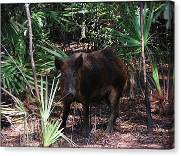 Wild Boar I Canvas Print