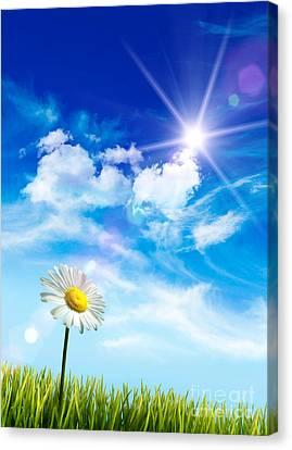 Wild Daisy In The Grass Against Bleu Sky Canvas Print by Sandra Cunningham