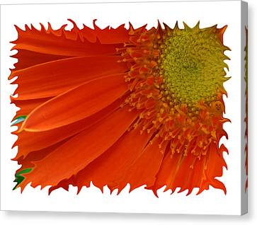 Canvas Print featuring the photograph Wild Daisy by Shari Jardina