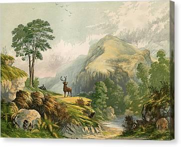 Wild Deer Canvas Print by Alexander Francis Lydon