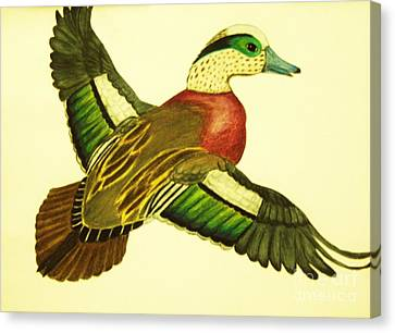 Wild Duck Canvas Print by Jamey Balester