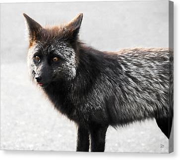 Wild Eyes Canvas Print by David Lee Thompson