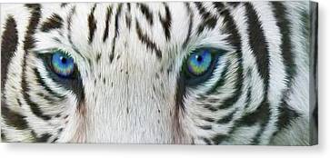 Wild Eyes - White Tiger Canvas Print