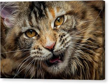 Canvas Print featuring the photograph Wild Face by Robert Sijka