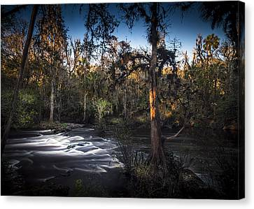Wild Florida Canvas Print by Marvin Spates