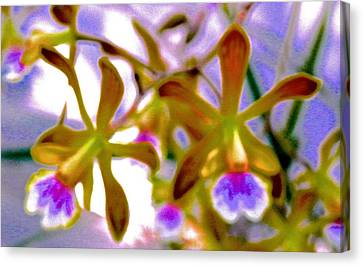 Golden Pink Orchid Canvas Print - Wild Florida Orchids by Joe Wyman