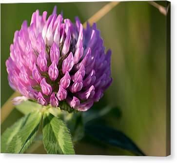 Wild Flower Bloom  Canvas Print