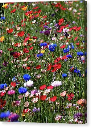 Wild Flower Meadow 2 Canvas Print