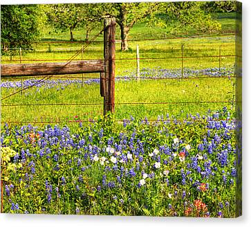 Wild Flowers And A Fence Canvas Print