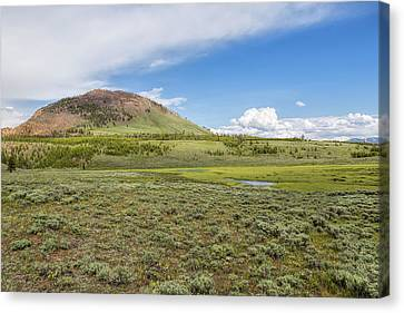 Canvas Print featuring the photograph Wild Flowers And Grasses At Yellowstone by John M Bailey