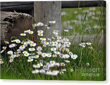 Wild Flowers  Canvas Print by Juls Adams