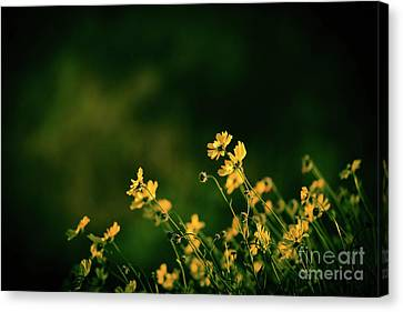 Canvas Print featuring the photograph Evening Wild Flowers by Kelly Wade