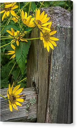Split Rail Fence Canvas Print - Wild Flowers by Paul Freidlund