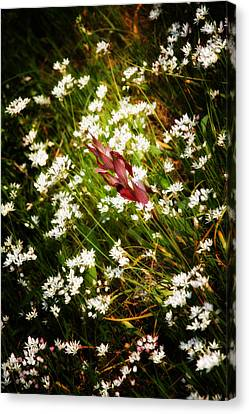 Wild Flowers Canvas Print by Stelios Kleanthous