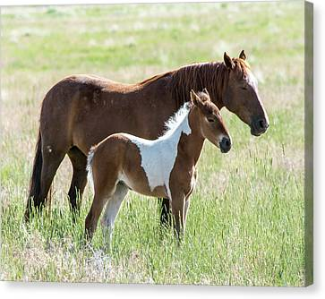 Canvas Print featuring the photograph Wild Foal With A Horse Pattern  by Mary Hone