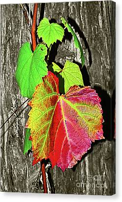 Canvas Print featuring the photograph Wild Grape Vine By Kaye Menner by Kaye Menner