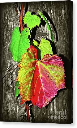 Canvas Print featuring the photograph Wild Grape Vine II By Kaye Menner by Kaye Menner