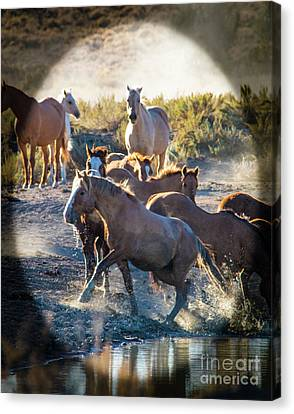 Wild Hearts At Play Canvas Print by Betty Doran