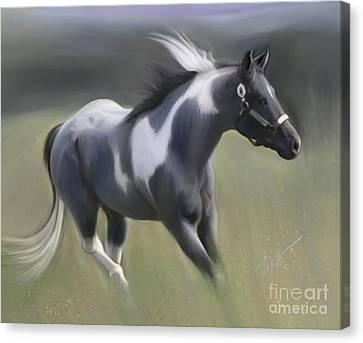 Wild Horses Blue Roan Stallion  Canvas Print
