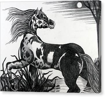 Wild Horse Canvas Print by Bob Crawford