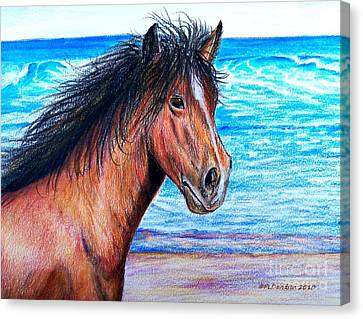 Wild Horse On The Beach Canvas Print by Patricia L Davidson