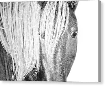 Wild Horse Portrait Canvas Print