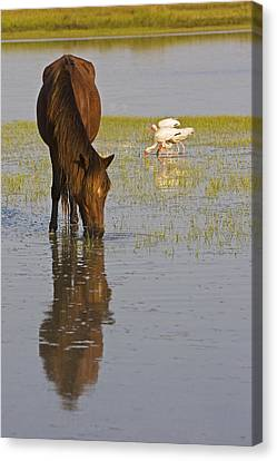 Wild Horse Reflection Canvas Print