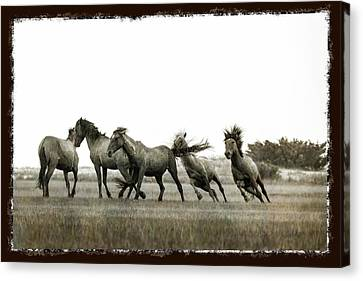 Wild Horse Series  - Chasing His Rival Canvas Print