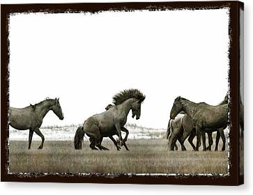 Wild Horse Series - Going After The Competition Canvas Print